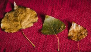Leaf Collecting Montessori