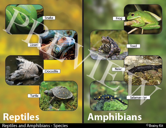 Reptile and Amphibian - compare and contrast chart