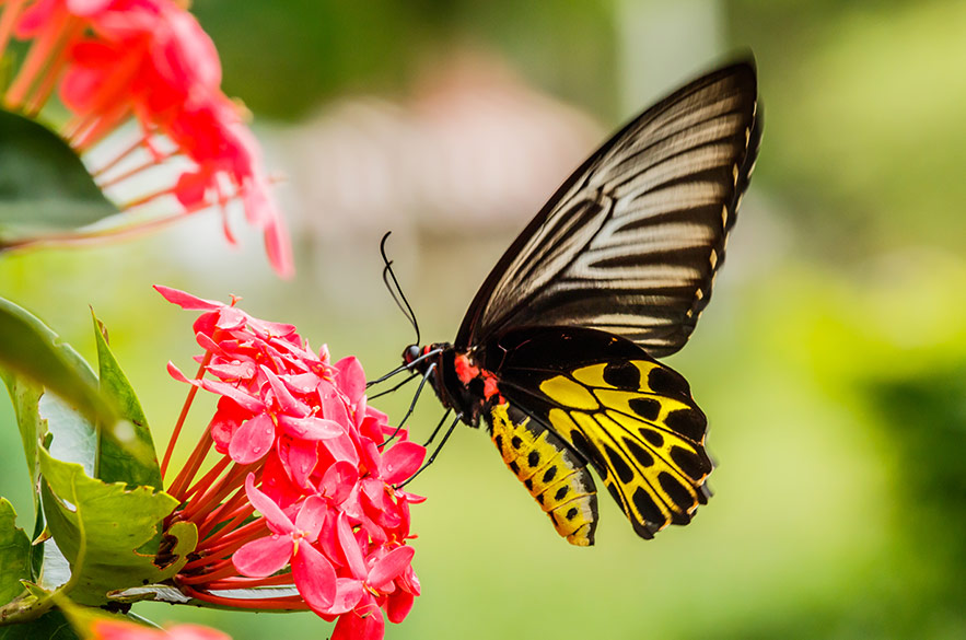 A butterfly feeding on a colorful flower.